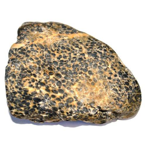 Oncolite pebble